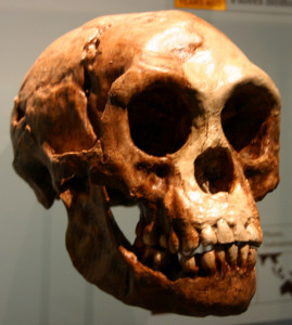 Lebka Homo floresiensis