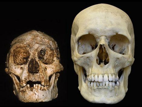 Lebky Homo Floresiensis a Homo sapiens
